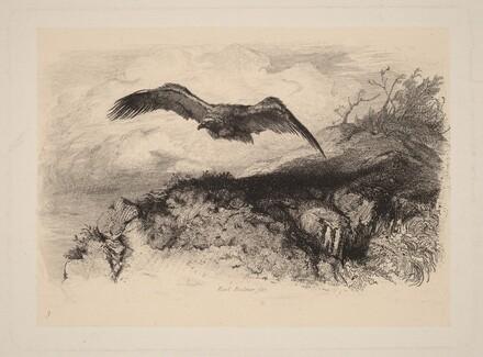 Aigle au vol