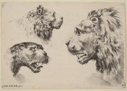 Three Lion Heads