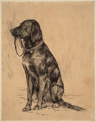 Aldrich's Dog