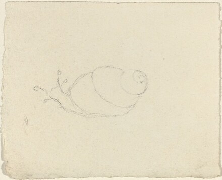 Snails [recto and verso]