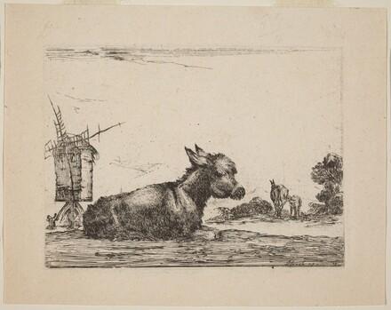 Donkey Resting