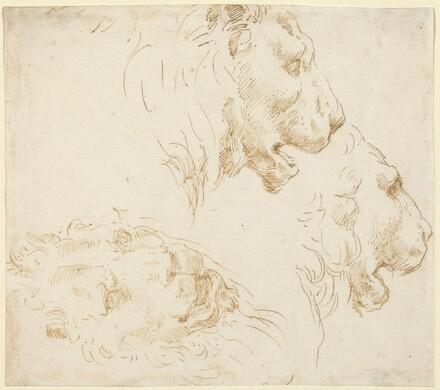 Studies of a Lion's Head