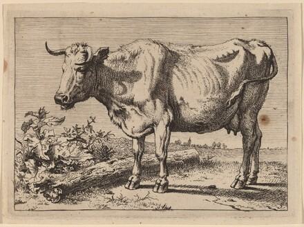 Standing Cow (Cow with a Crumpled Horn)