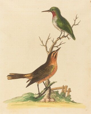 Green Bird with Red Throat and Brown and Orange Bird