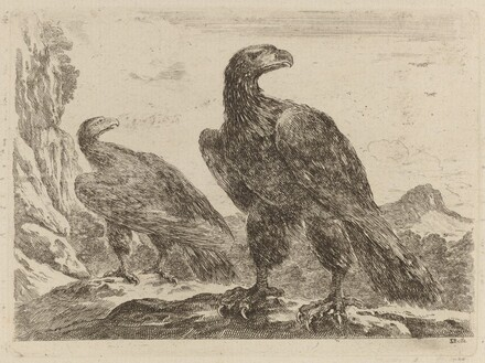 Two Eagles, Both with Heads Turned to the Right