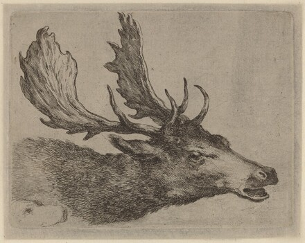 Head of a Stag Turned Right