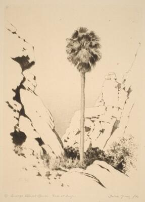 Palm Canyon (no.1)