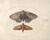 Animalia Rationalia et Insecta (Ignis):  Plate XXV
