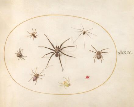 Animalia Rationalia et Insecta (Ignis):  Plate XXXIX