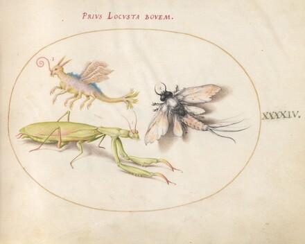 Animalia Rationalia et Insecta (Ignis):  Plate XLIV