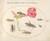 Animalia Rationalia et Insecta (Ignis):  Plate L