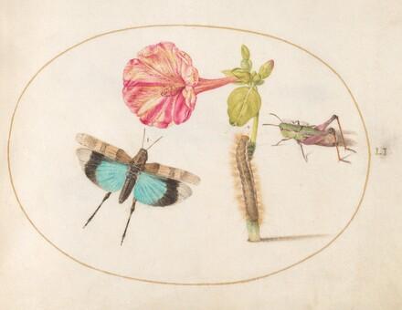 Animalia Rationalia et Insecta (Ignis):  Plate LI