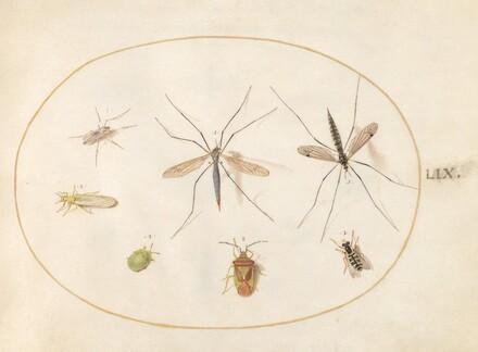Animalia Rationalia et Insecta (Ignis):  Plate LIX