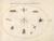 Animalia Rationalia et Insecta (Ignis):  Plate LX