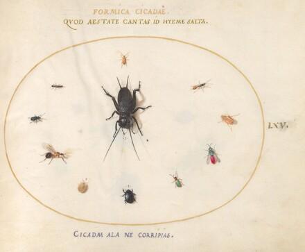 Animalia Rationalia et Insecta (Ignis):  Plate LXV