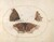 Animalia Rationalia et Insecta (Ignis):  Plate VI