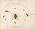 Animalia Rationalia et Insecta (Ignis):  Plate LXX