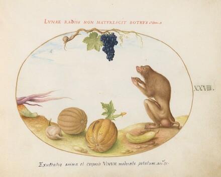 Animalia Qvadrvpedia et Reptilia (Terra): Plate XXVIII