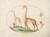 Animalia Qvadrvpedia et Reptilia (Terra): Plate II