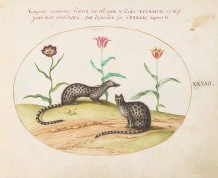 Animalia Qvadrvpedia et Reptilia (Terra): Plate XLII