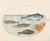 Animalia Aqvatilia et Cochiliata (Aqva): Plate XI
