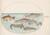 Animalia Aqvatilia et Cochiliata (Aqva): Plate XXXVIII