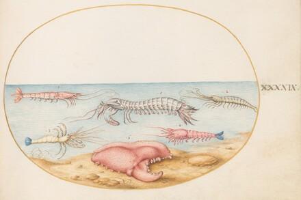 Animalia Aqvatilia et Cochiliata (Aqva): Plate XLIX