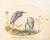 Animalia Volatilia et Amphibia (Aier): Plate XIX