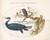 Animalia Volatilia et Amphibia (Aier): Plate XXIII