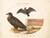 Animalia Volatilia et Amphibia (Aier): Plate II
