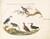 Animalia Volatilia et Amphibia (Aier): Plate XLVII