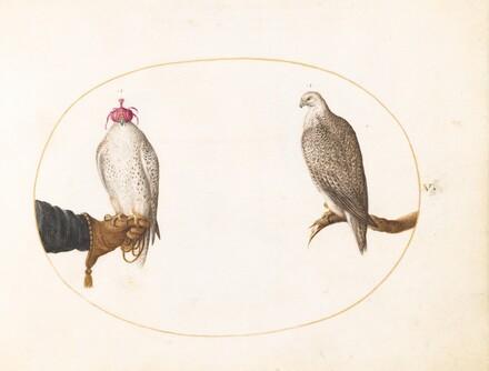 Animalia Volatilia et Amphibia (Aier): Plate V