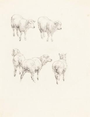 Five Sheep