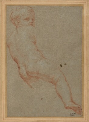 Study of a Young Boy