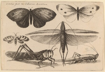 Six Insects