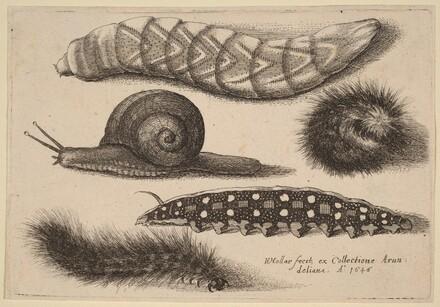 Four Caterpillars and a Snail