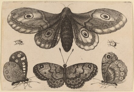 Moth, Three Butterflies, and Two Beetles