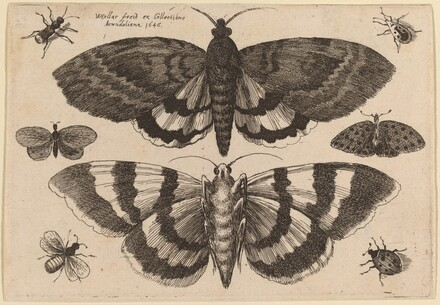 Two Moths and Six Insects