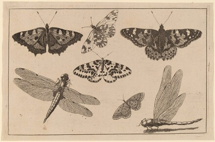 Two Dragonflies and Five Butterflies