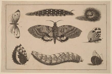 Three Caterpillars, a Moth, and Four Butterflies