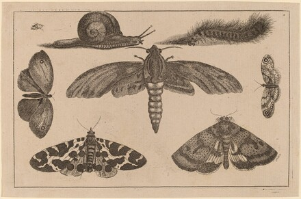 Six Insects, a Caterpillar, and a Snail