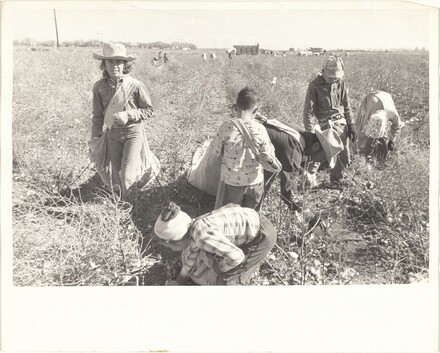Cotton harvesters--New Mexico