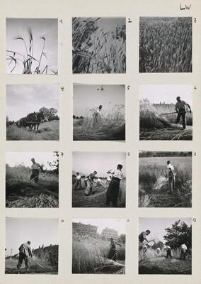 Die Landwirtschaft (Farming) 1-12