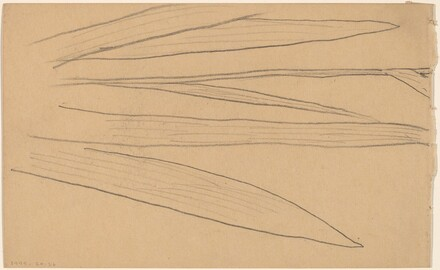 Study of a Flower [verso]