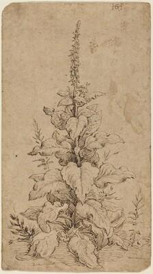 A Foxglove in Bloom