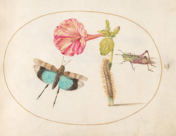 Plate 51: Grasshoppers and a Caterpillar with a Four O