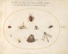 Plate 21: A Butterfly with a Dragonfly, a Ladybug, and Five other Insects