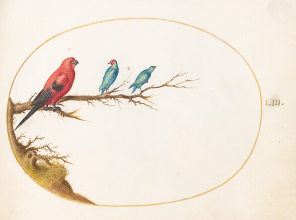 Plate 53: Three Brightly Colored Birds