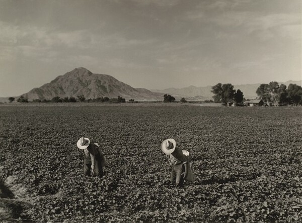 Mt. Signal, Imperial Valley, California