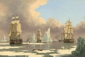 Three, tall sailing ships, each with three masts and full sails, float in calm, arctic waters, surrounded by fragments of icebergs and ice floes amid a smattering of arctic animals, including polar bears, narwhal whales, seals, and birds, in this horizontal landscape painting. The horizon line comes about a quarter of the way up the composition so the sails and rigging of the ships are shown against the sky. The clouds have ivory tops and lavender-purple undersides, and they curve in a C-shaped bank around the clear blue sky at the top right corner. The three ships closest to us are spaced evenly across the composition, with the left-most the closest, and therefore largest. The ship to our right is set a bit farther back, and the center ship is the farthest away. A rowboat holding several men has pulled alongside the boat to our left, and more men haul massive slabs of whale blubber up the side of the ship. More men walk on an ice floe nearby. Close inspection reveals more rowboats around and beyond these ships, and several more ships fading into the hazy distance along the horizon. Jagged edged chunks of icebergs as tall as the ships float around them. Closer to us, a trio of seals sits on an ice floe near the lower center of the composition, and a mother stands nose to nose with her cub to our right. Two narwhal whales with long tusks growing from their noses break the surface of the water between us and the ships, as does a whale's tail near the boat to our right. Two walruses with long tusks sit on a floe near the center ship. A couple dozen birds, many white with black wing tips, fly low over the surface of the water across the painting.